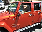 Stock_Jeep_Small_Pics_3_.jpg