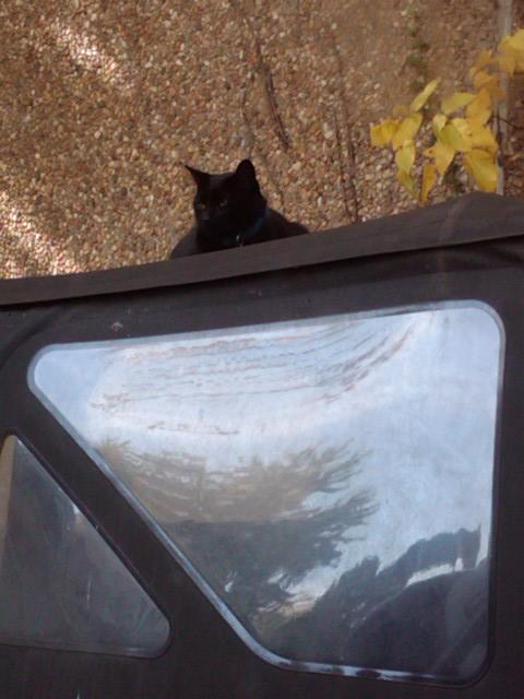 kitty_on_jeep