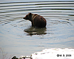 14_Grizzly_bear_family_mom_3_cubs_Teton_Ox_Bow_5-7-2008.jpg