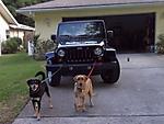 Dogs_pulling_car.jpg
