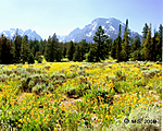 Jeep_in_Teton_Park_28_Mt_Moran_7-9-2008.jpg