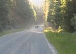 Moose_crossing_01.JPG