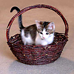 Munchie_kitten_9_wks_in_a_basket_B_11-2003.jpg