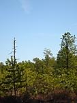 Pines_3-21-09_46.jpg