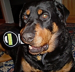 ROWDY_THE_JEEP_DOG_028.JPG
