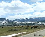 Springtime_in_the_Tetons_D_Buffalo_5-4-2008.jpg