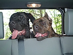 dogs_jeep.jpg