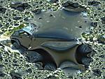 fractaljeep.jpg