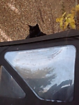 kitty_on_jeep.jpg