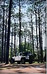Jeep_trees.JPG