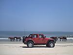 photos_Myrtle_Beach_556.JPG